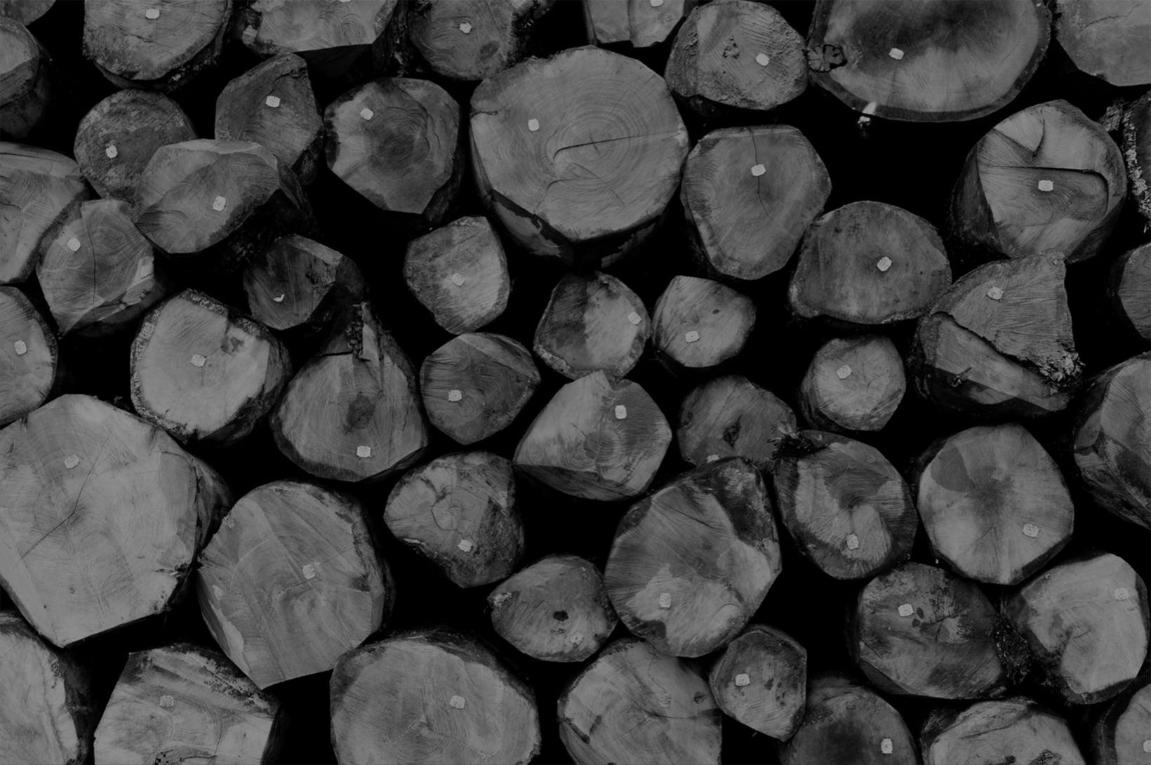 Moskito parquets Barcelona foto troncos árboles en blanco y negro